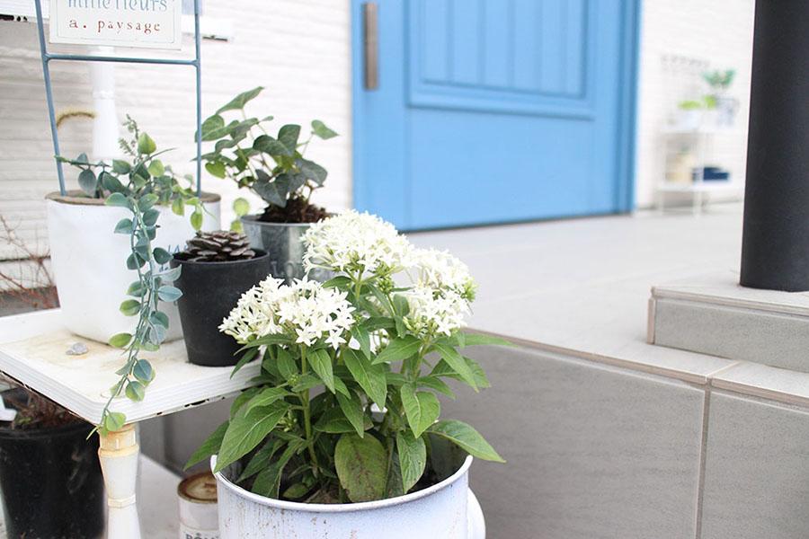 ユダ木工の青い木製玄関ドアと白い花の庭