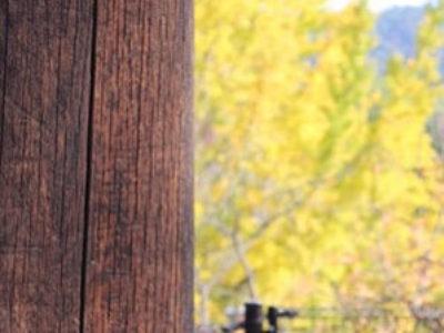 今春リリース!Uw値=0.82W/㎡kの木製玄関ドア