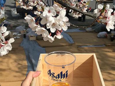満開の桜と桧端材の手作り枡。ユダ木工花見!