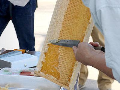 ユダ木工屋上。ミツバチを農薬から守る「都市型養蜂」
