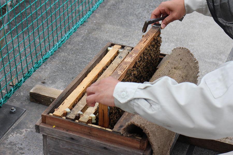 養蜂箱の中