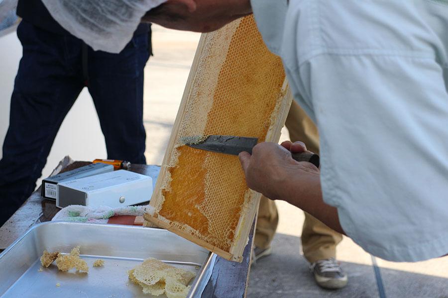 蜂蜜がいっぱい