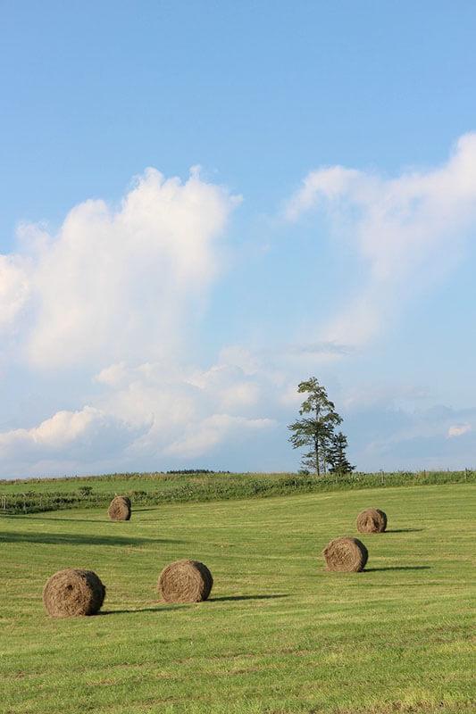 黒木牧場 牧草