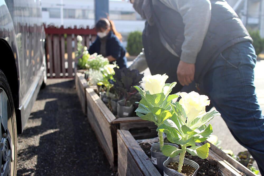 冬の花の寄せ植え
