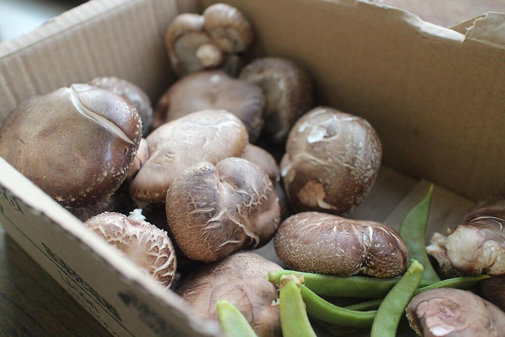 ユダ木工の社内菜園で採れた椎茸