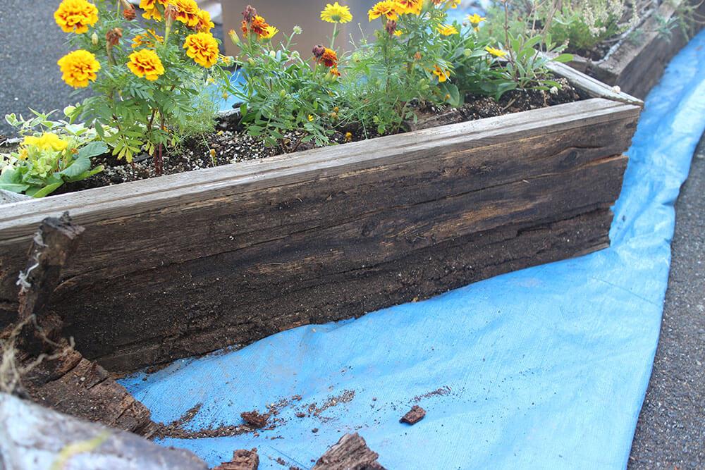 腐食した旧木製プランター 木は土に還る
